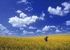 آیا شما می دانید چرا رنگ آسمان آبی است؟
