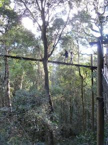 Sentier dans la canopé, Lamington National Park