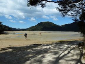 Traversée de la baie d'Awaroa