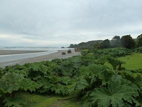 Parc national Chiloe et rhubarbes géantes