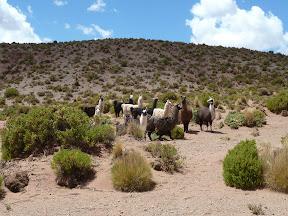 Grands lamas