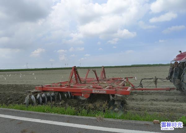 虎尾墾地里-白鷺鷥群聚爭食 農田整地翻出的昆蟲