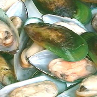 Post image for Green Lipped Mussel Extract – An Effective Arthritis Treatment