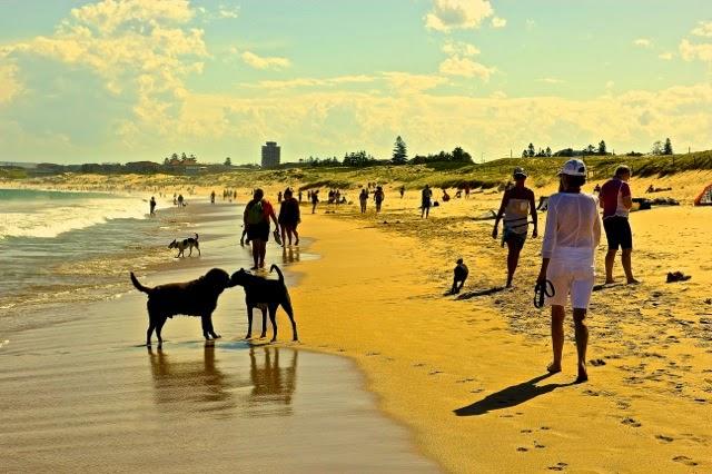 Dog-friendly beach in Sydney, Australia