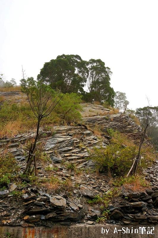 台24線生態漫步|雲霧繚繞台24線,漫步在這裡不輕鬆,霧大外,還得小心落石...