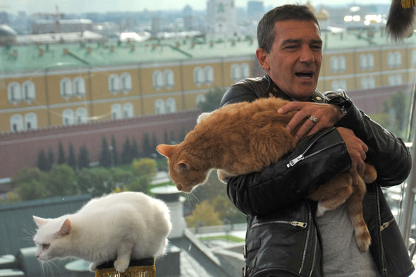 Antonio Banderas and two cats outside