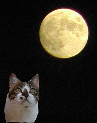 Mirando a la luna...