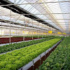 Greenhouse Hydroponic Systems