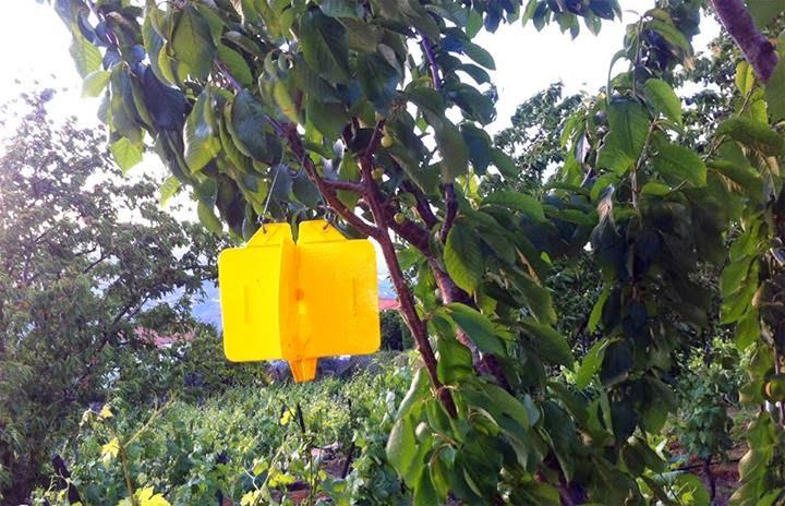 Junta de Freguesia de Penajóia aposta na prevenção das pragas da fruta