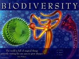 biodiversity Keanekaragaman hayati (biodiversitas)