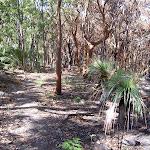 Bullimah Track's burnt bush (20381)