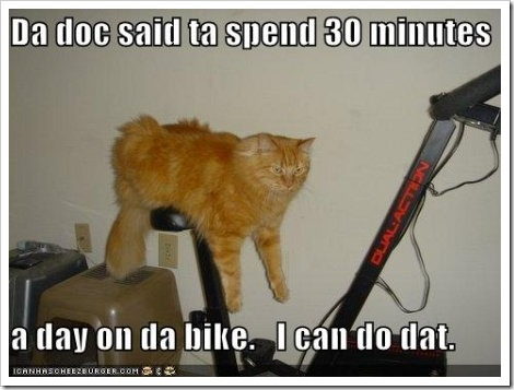 photo of a cat laying on top of an exercise bike