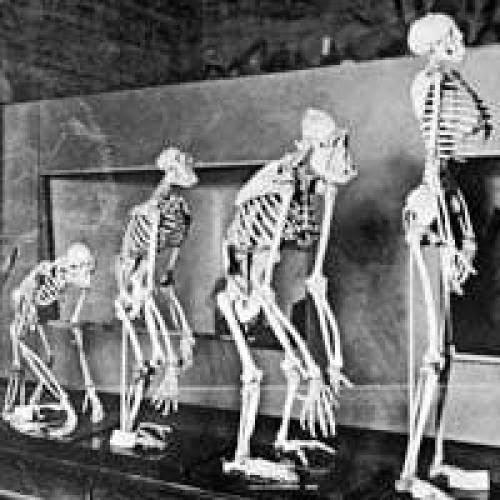 Does Evolution Cause Hopelessness
