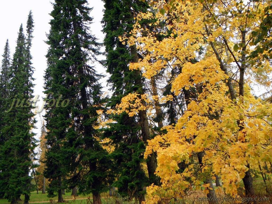 Лаппеенранта осенние финские краски фото