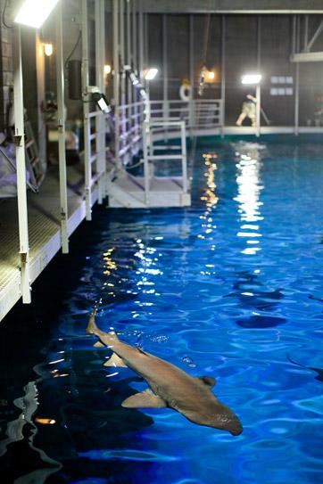 Feeding Sharks at the Shark Reef Aquarium at Mandalay Bay Las Vegas NV.