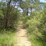 Nature Track (41766)