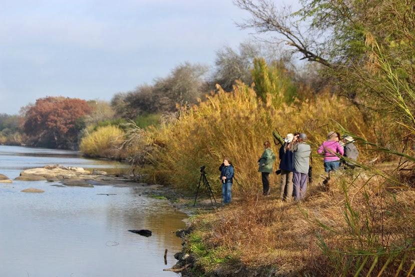birding upper rio grande