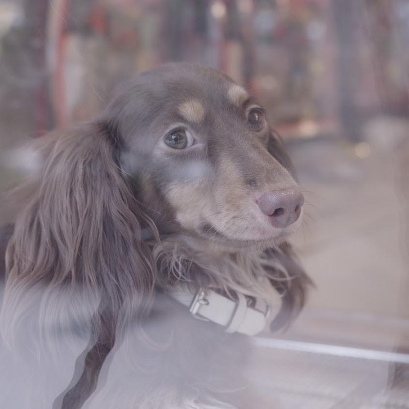 寵物店的幼犬