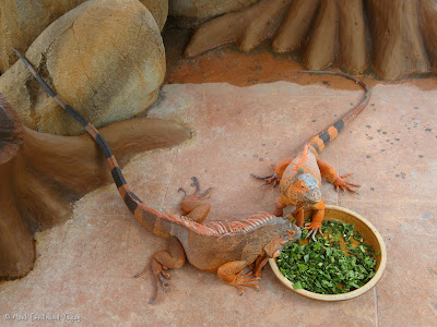 Sunway Lagoon - Wildlife Park Batch 4 Photo 5