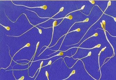 ¿El semen humano pierde propiedades?