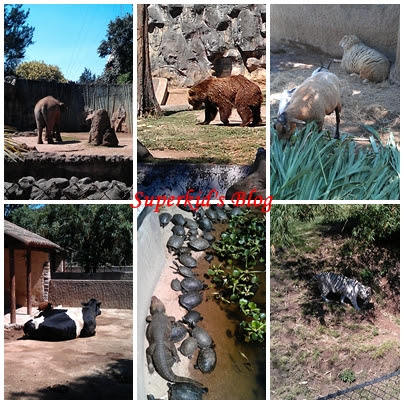 瓜京動物園亞洲區