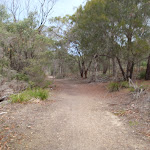 Track to Bournda Beach car park (106954)