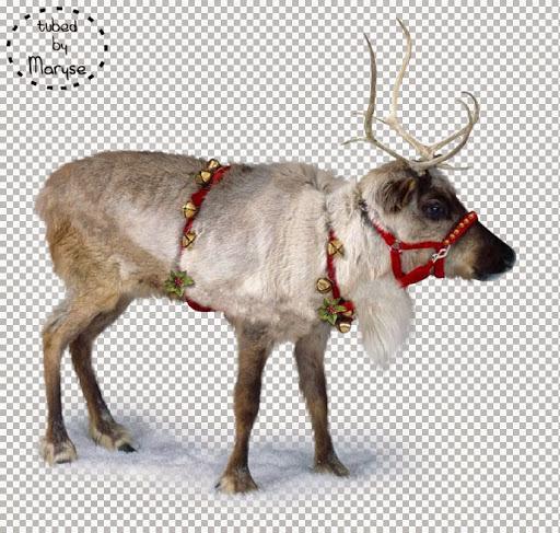 MR_Santa's Reindeer.jpg