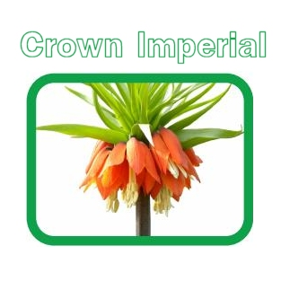Crown Imperial Garden Services
