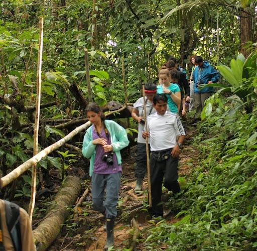 International monitoring protocols to explore chytrid fungus on frogs in the Amazon