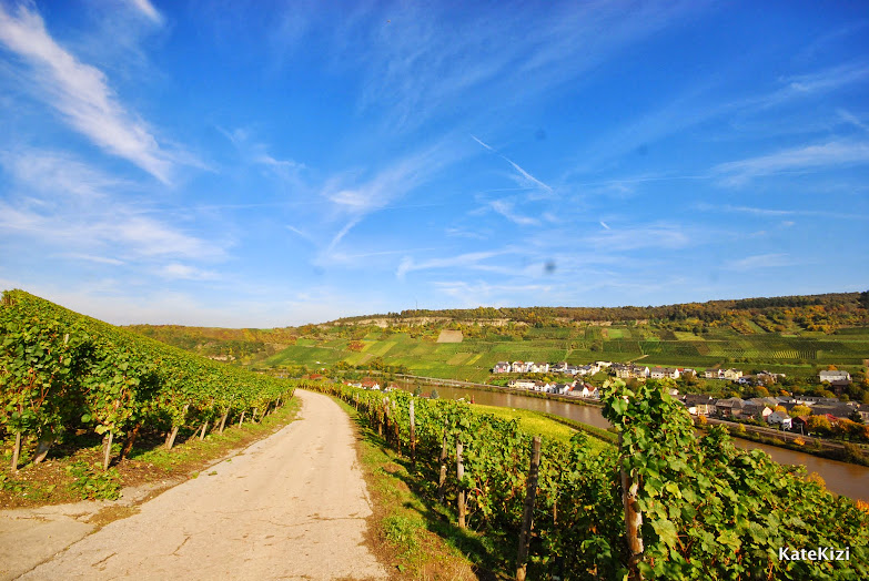 Прогулка по виноградникам в солнечную погоду - сплошное удовольствие: осеннее солнце ласково греет, ветра нет, что совершенно не обычно для Люксембурга, в деревне где-то далеко жужжит пила.. Идиллия