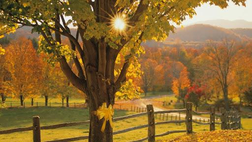 Yellow Ribbon in Autumn.jpg