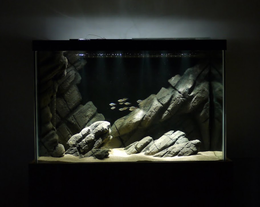 Concerns On A Diy Background The Planted Tank Forum