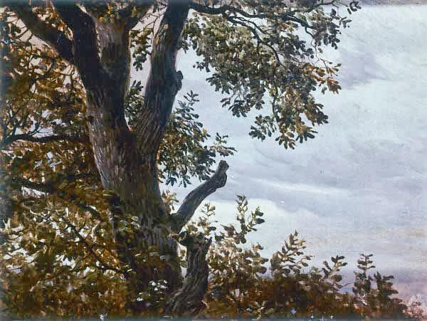 Carl Gustav Carus - Baumstudie mit Wolken
