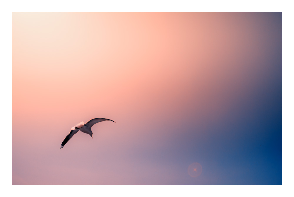 Nature and Landscape photography, bird watching, soaring seagull, spread your wings