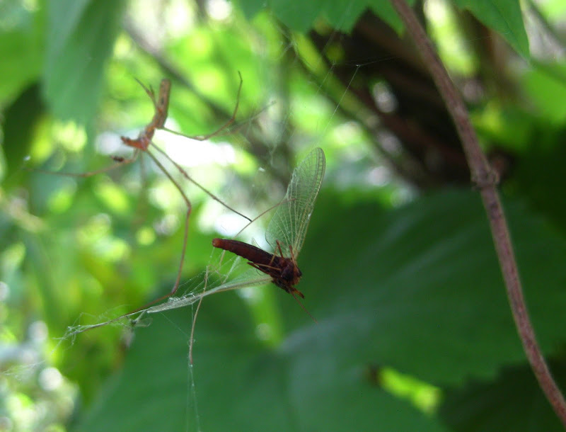 Slike insekata- buba - Page 2 IMG_3748
