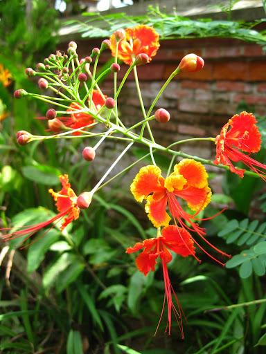 Flowers, Bali