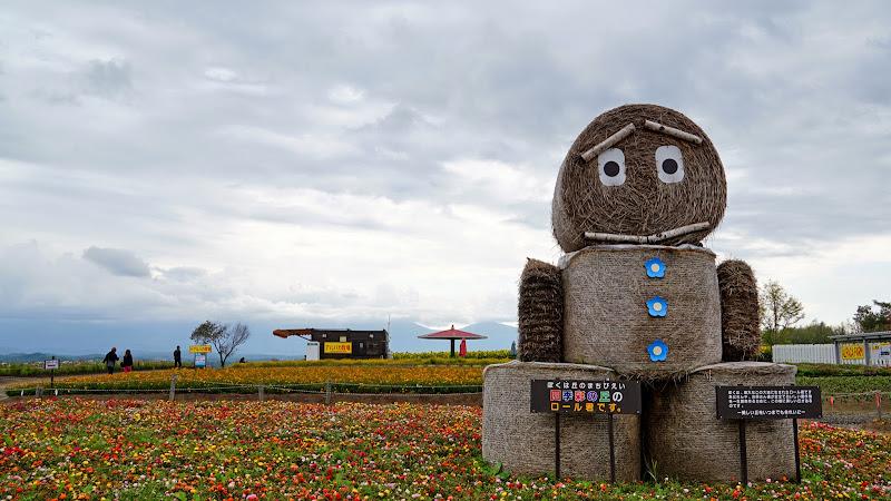 美瑛 四季彩の丘 写真2