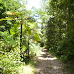 Fern trees and moist forest in the upper Lane Cove Valley (394499)