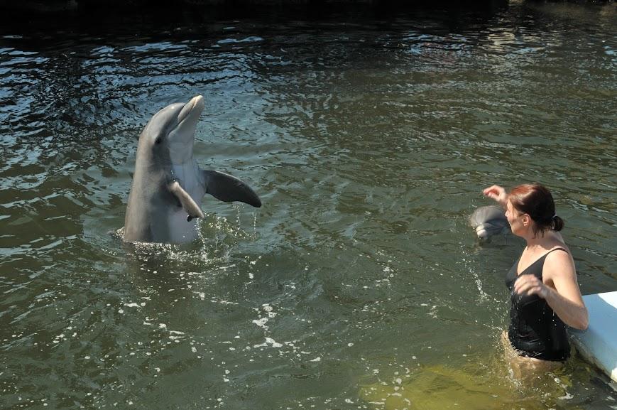 Delfin4.jpg