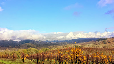 View of rollings hills of vines at Iron Horse Vineyards