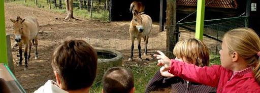 Bruselas Valonia: niños viendo burros en un zoo