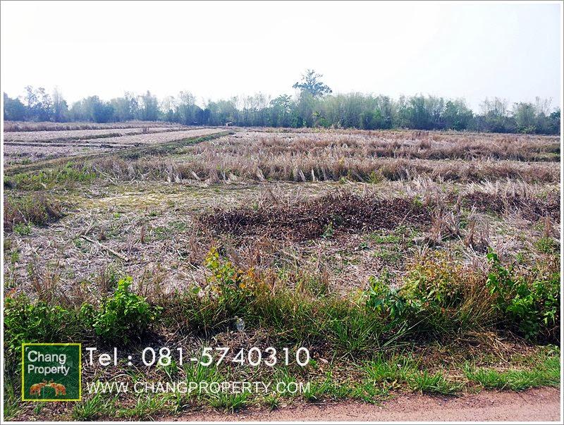 ขายที่ดินอ.บ้านดุง จ.อุดรธานี :land in udonthani