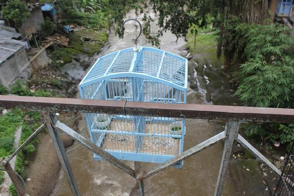 Pasar Burung Splendid Kota Malang