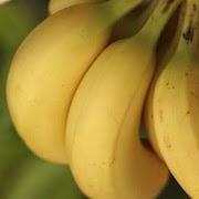 К чему снятся бананы?