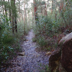 Bushtrack down into Sassafras Gully (148602)