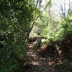 Heading through the thick bush (131353)