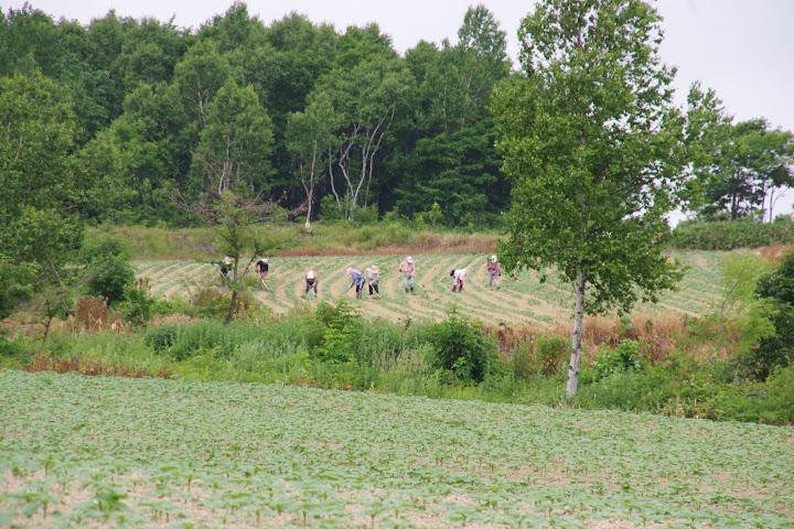写真:西側一番奥の草取り