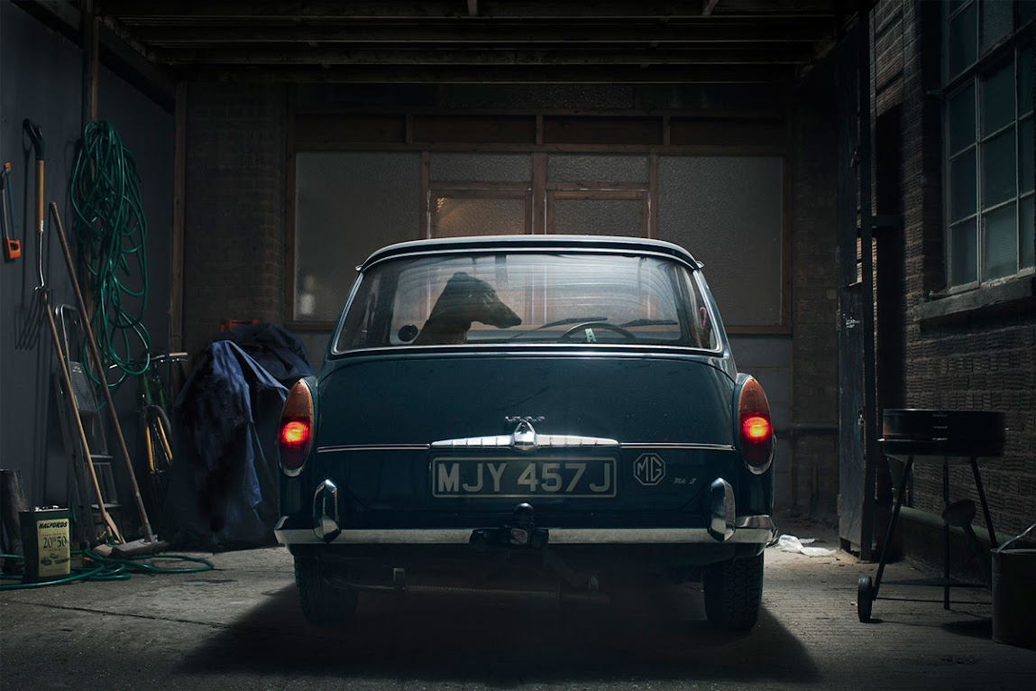 *被鎖在車內沉默的狗:攝影師Martin Usborne 黑暗呈現! 4