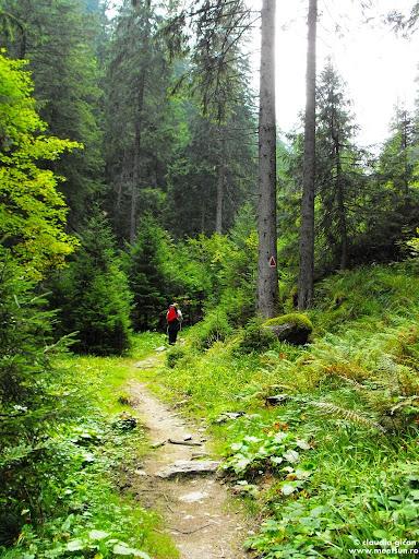 Valea Vistei o pădure exotică de la atâta apă