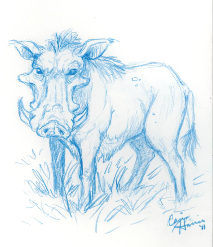 Wild Boar Sketch - CassiaWild Boar Sketch